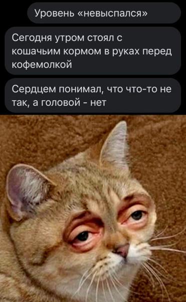 wTMq8Cr_ruc