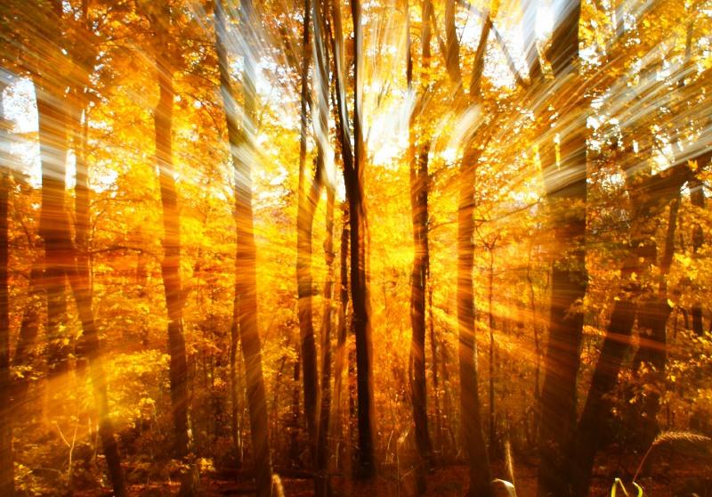 отличается наличием, тонирование теплого осеннего фото с лучами солнца что