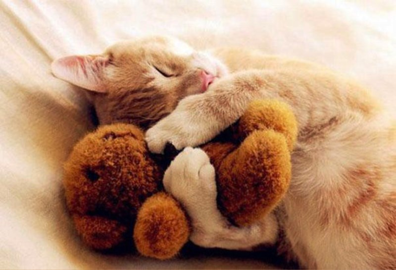 sleepy animals pictures - 1000×682
