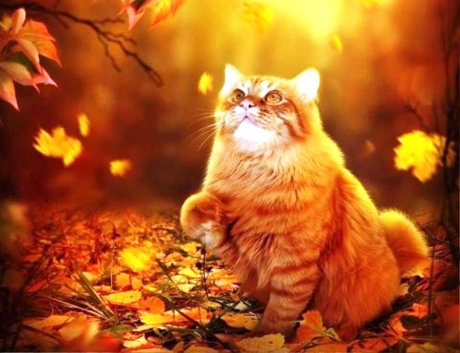 Открытки кота осени, картинки загрузка открытки