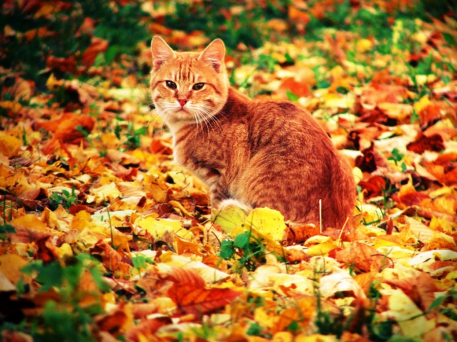 осень и кот фото