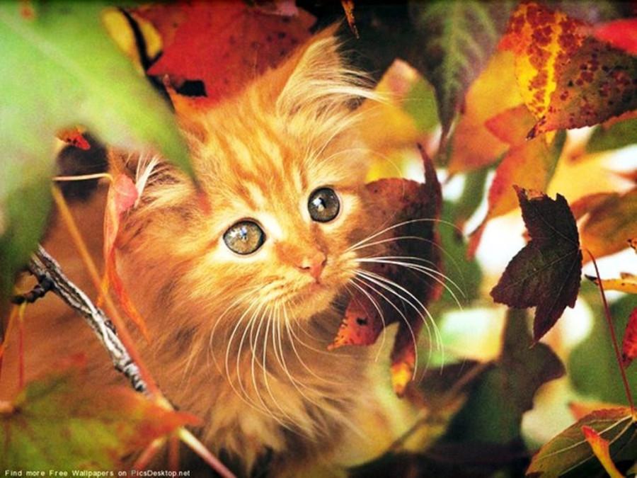 Открытки не грусти осенью