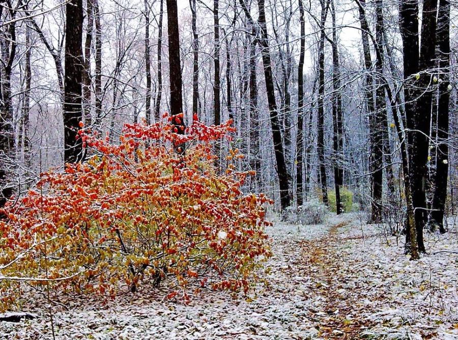 Картинки гифы поздняя осень