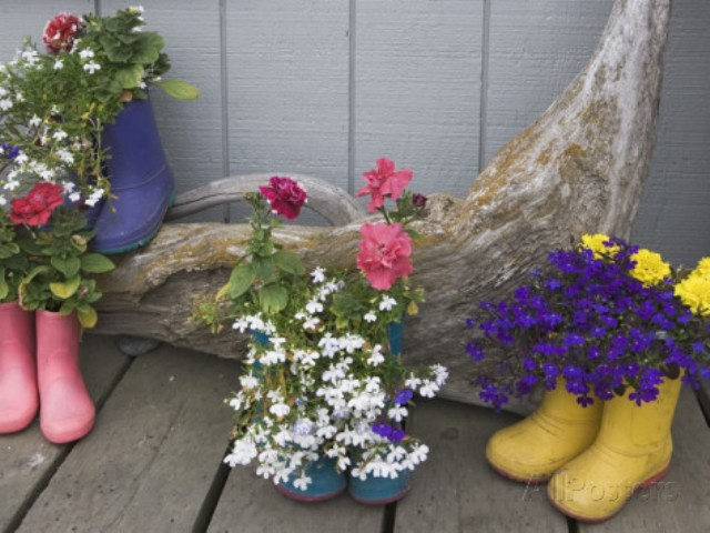 dennis-flaherty-colorful-rubber-boots-used-as-flower-pots-homer-alaska-usa