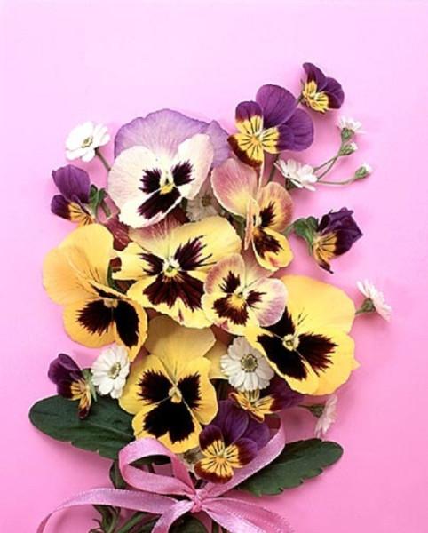100387049_large_flower014