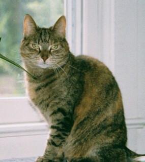 Ginger kitty: ?-10/30/2006