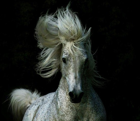 1246987298_love-is-in-the-hair-uploaded-by-observer-category
