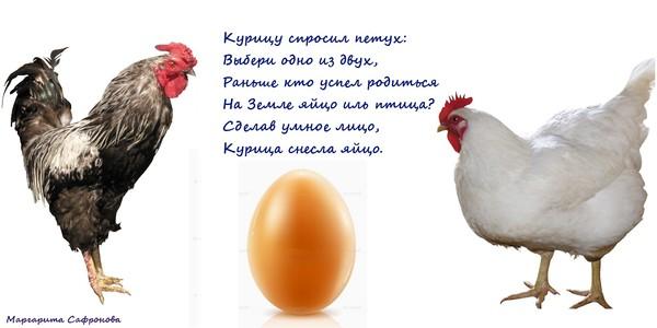 Сценка поздравление от курицы
