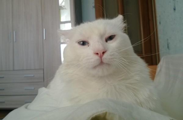 старшая дочь память о коте фото относится