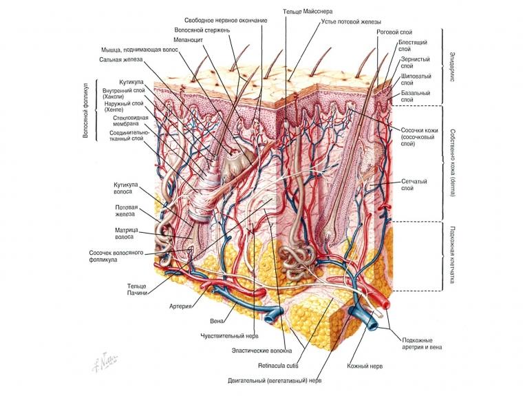 Увеличение предстательной железы и лечение