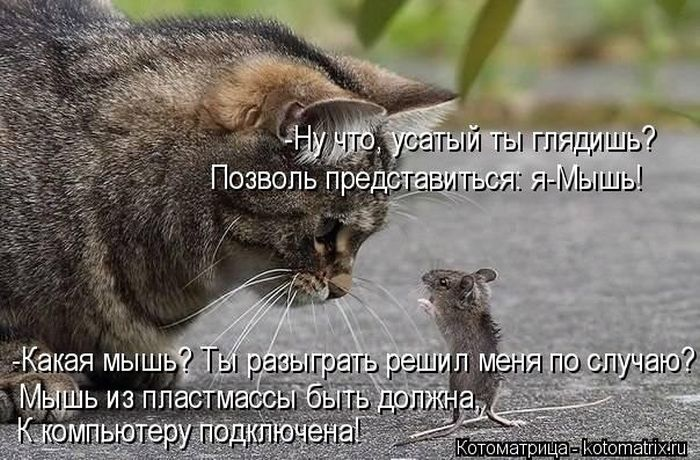 1376215141_kotomatrix_15_1