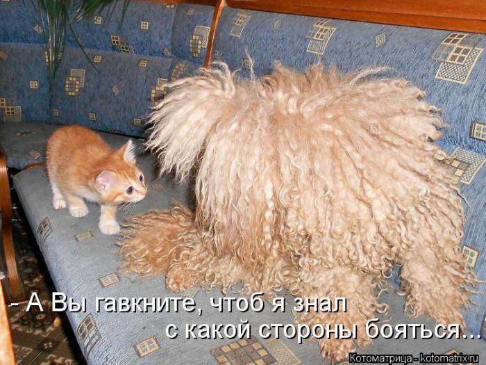 1376215160_kotomatrix_34_1