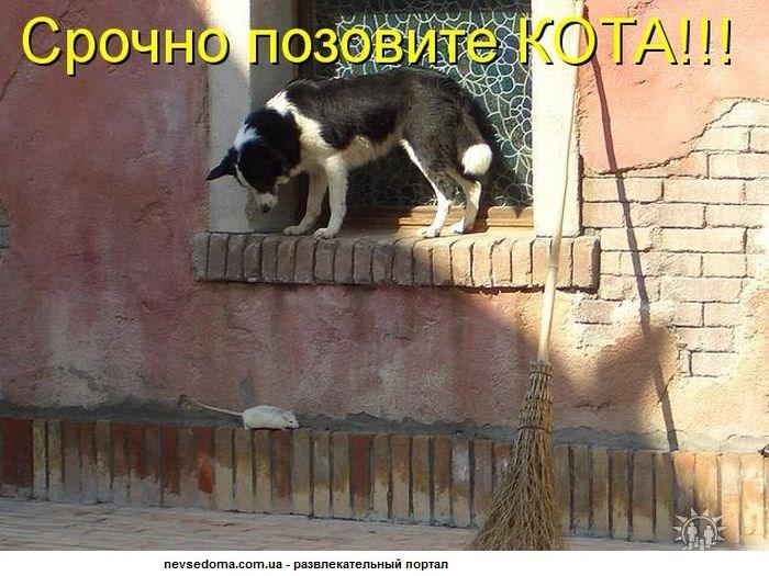 kotombTX
