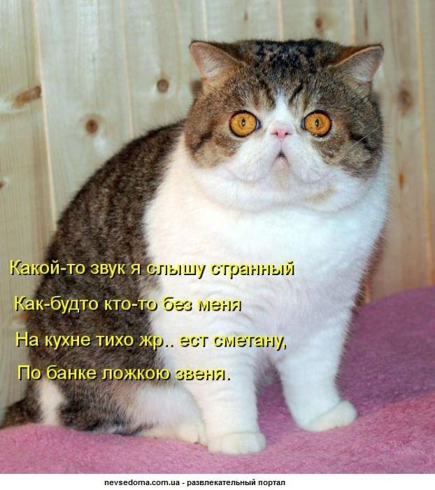 kotombUH