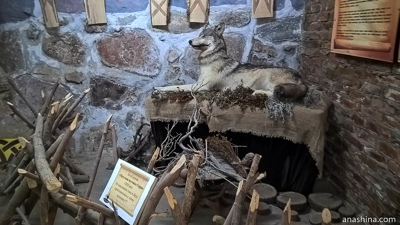 Прусская волчица Герра