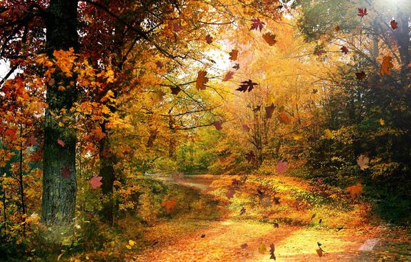 http://ic.pics.livejournal.com/maria_gepard/53617505/2462/2462_original.jpg