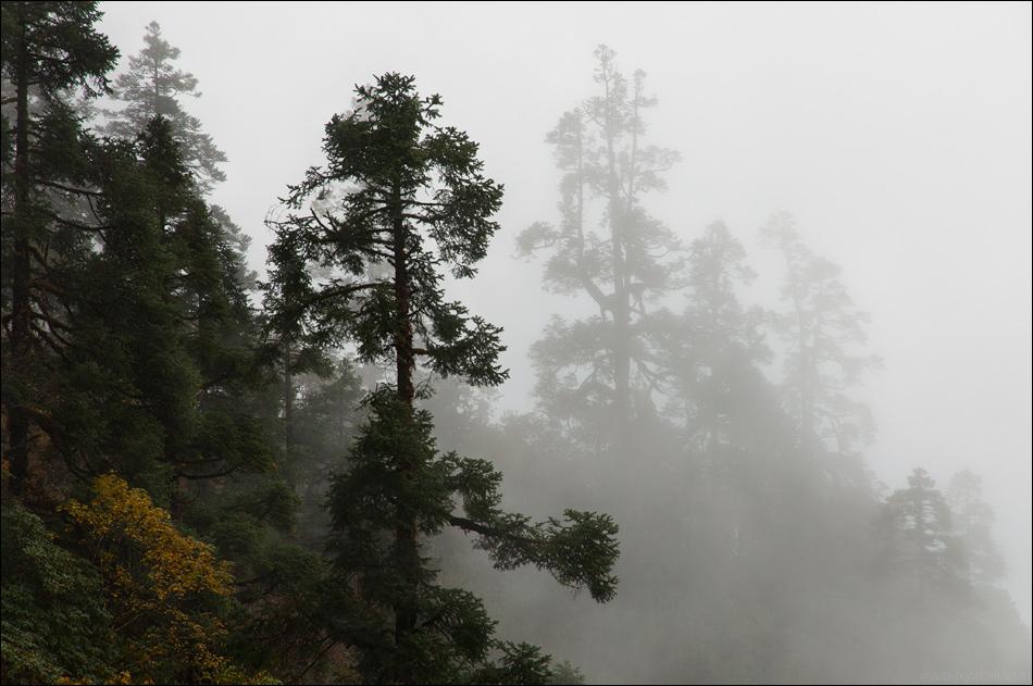 Mystic forest by Maria Gorbatova (mariagorbatova) on 500px.com