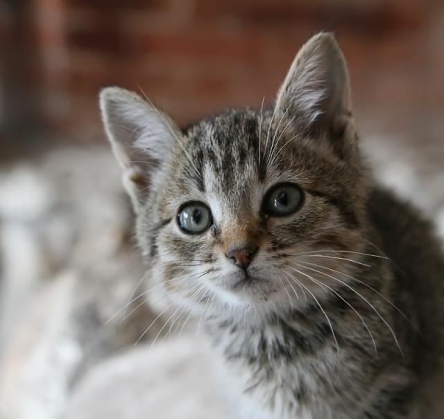 Этого котика я сфотографировала в ...: maria-senderova.livejournal.com/6593.html