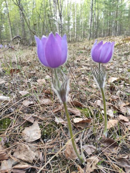 ТОП постов о лесе и весенней зелени