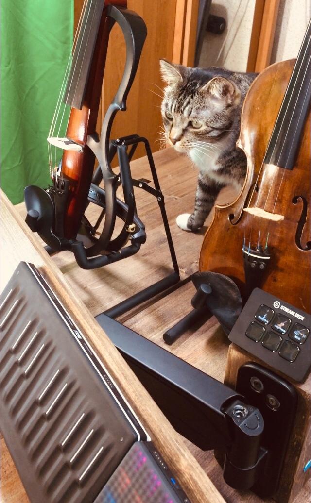 #кот #пушистый #полосатый #Матроскин #любопытныйкот #котик #домашниеживотные #скрипка #скрипки #мидиклавиатура #оборудованиедлятрансляции #музыка #музыканаскрипке #мариямун #mariamoon