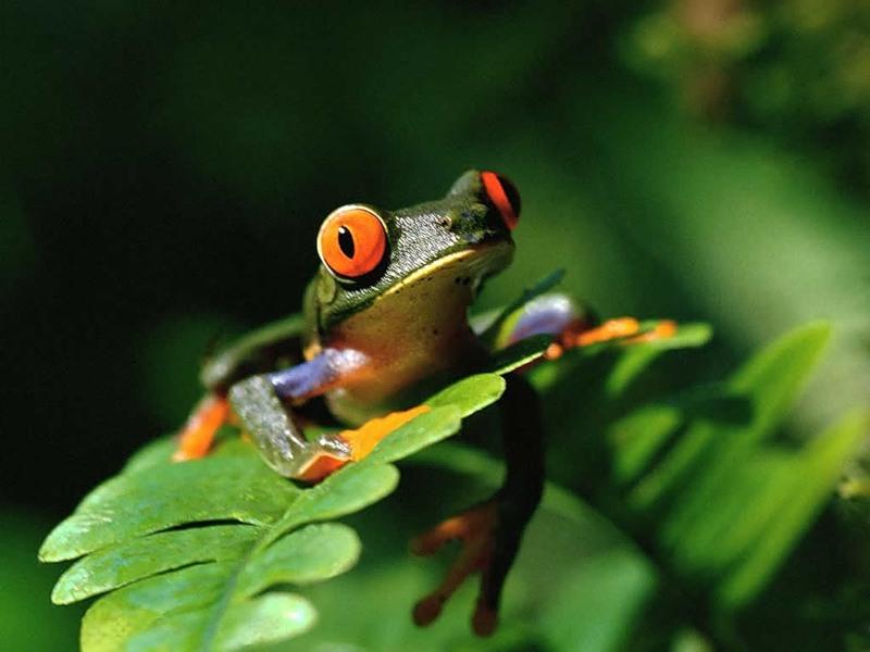 Лягушка на листике