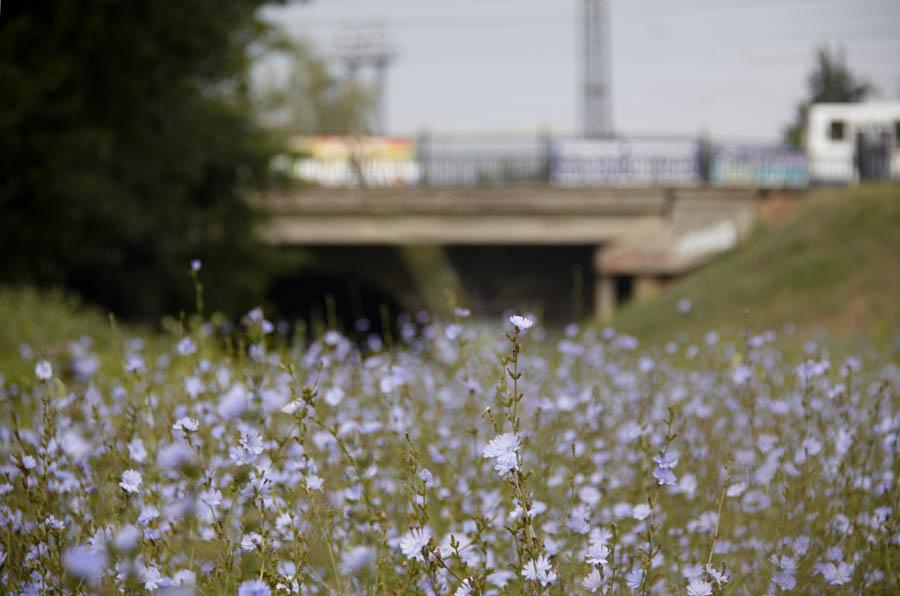 Державинский мост в Тамбове. Фото 16 июля 2012 г.