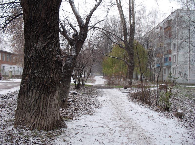 Первый снег в Тамбове. Фото 26 ноября 2012 года