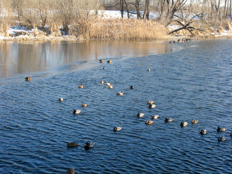 Река Цна. Фото 12.12.12