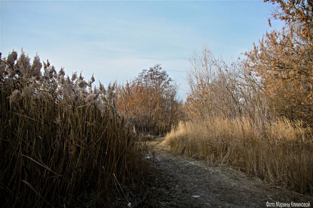 У реки. Тамбов. Фото 2 декабря 2020 года