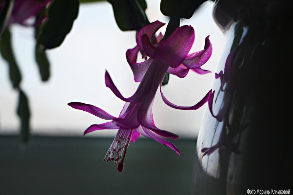 Мои цветы. Фото 1 февраля 2021 года