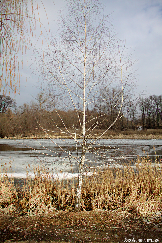 На реке Цне. Тамбов. Фото 1 апреля 2021 года