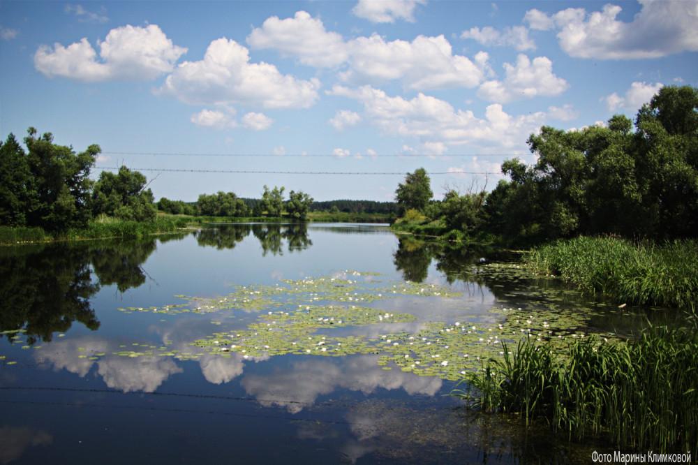 Река Цна. Тихий Угол. Фото 24 июня 2021 года