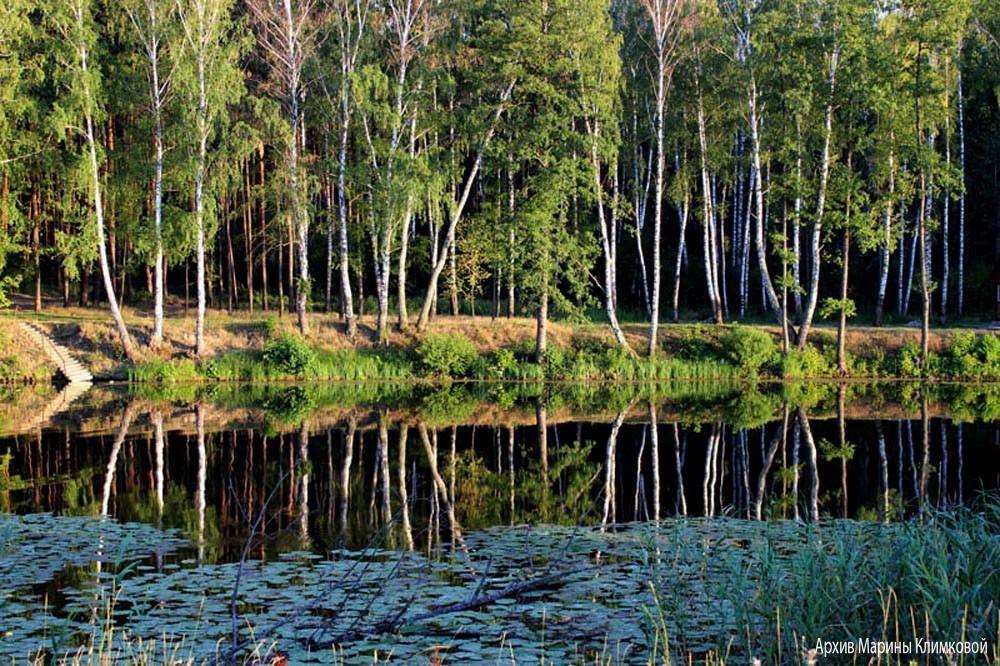 Река Цна близ базы отдыха «Галдым». Фото 2014 года