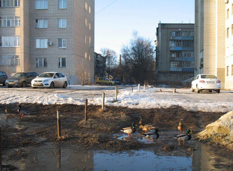 Мостик через Студенец. Фото 26 февраля 2013 г.