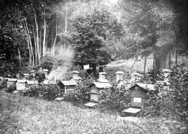 Ильиновка. Пасека. 1904