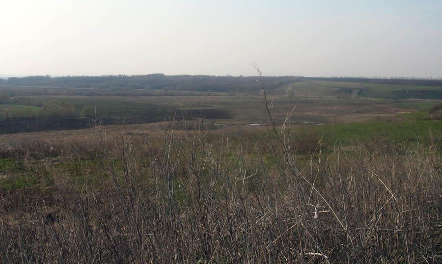 Вид от места усадьбы Ильиновка на рощу Лопатня. Фото 2006 г.