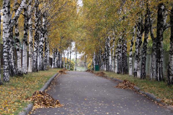Кучи-листьев-на-дорожке-1261736228_63