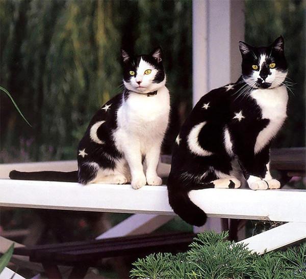 кошка раскраска 2