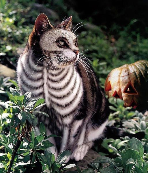 кошка раскраска четыре