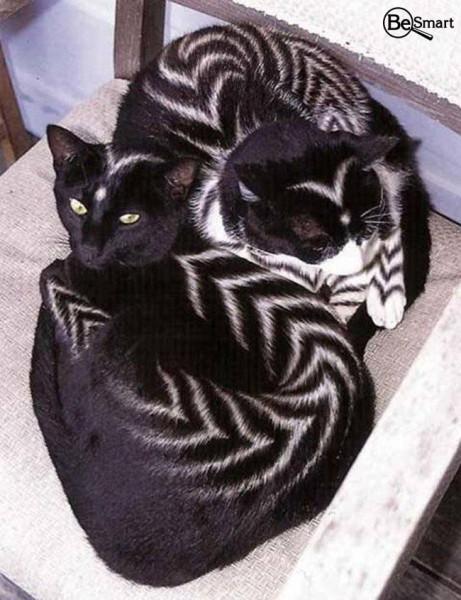 кошка раскраска девять