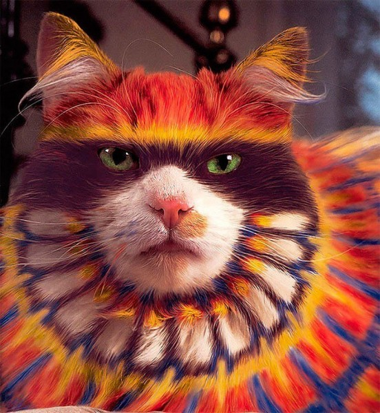 кошка раскраска семь