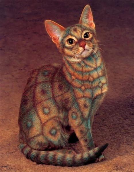 кошка раскраска шесть