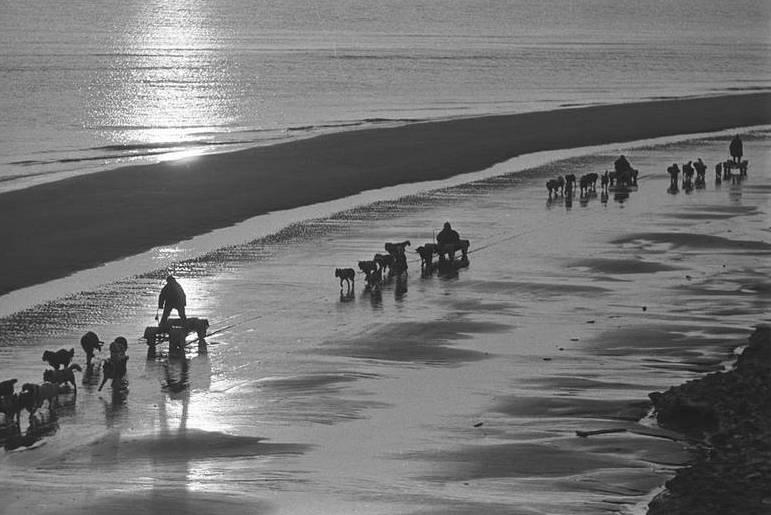 Собаки на севере