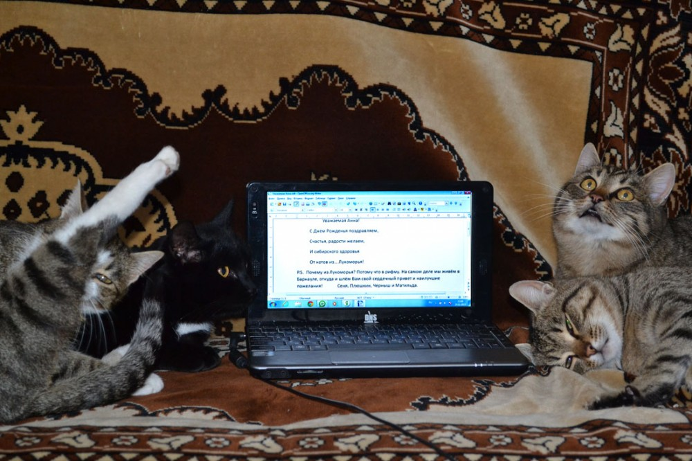 Коты Елены Бузовой (1)
