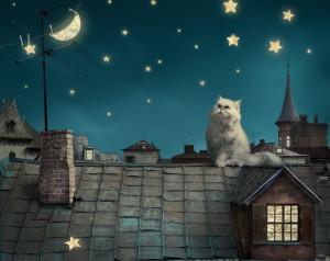 Кот-на-крыше.jpg
