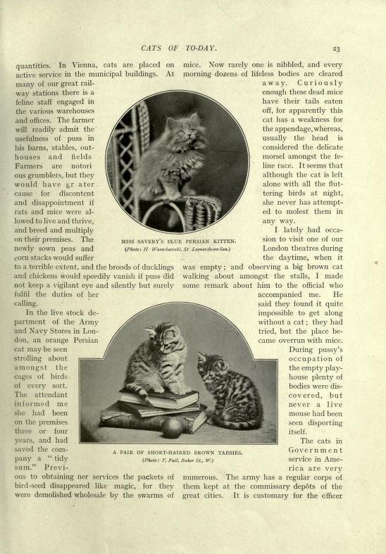 bookofcatsimpson00simprich_0041.jpg