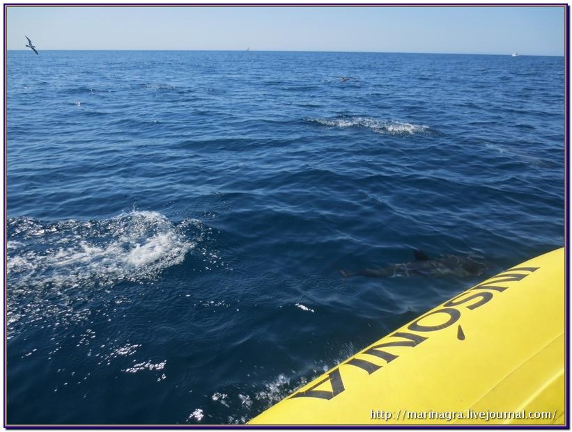 После свидания с дельфинами лодка