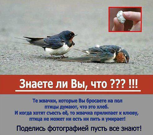 птицы и жвачки