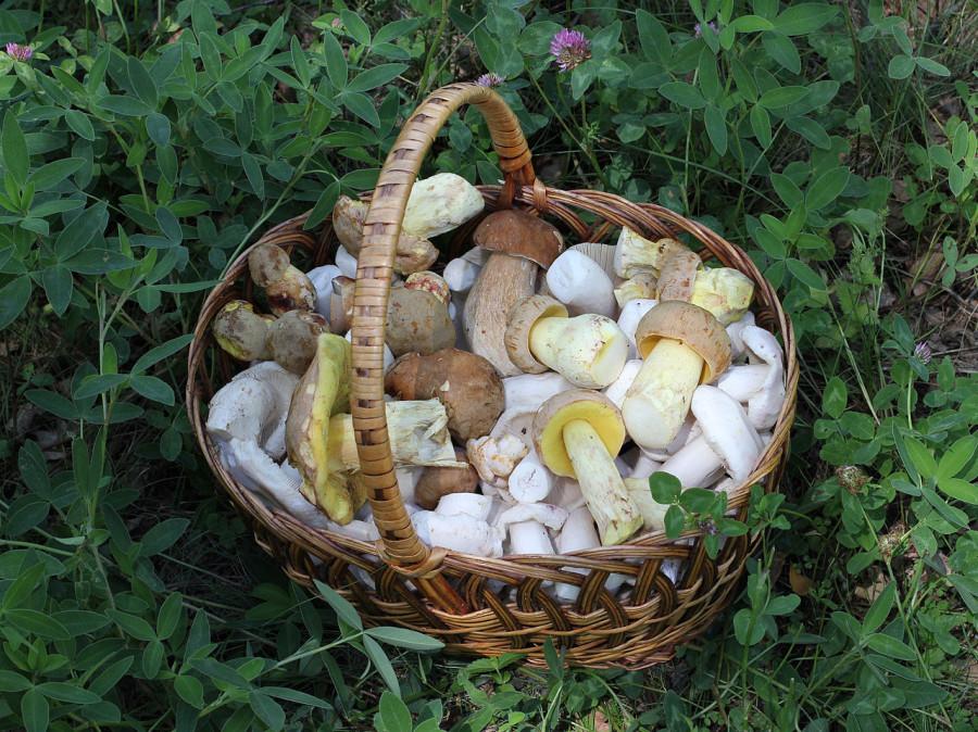 1280px-Edible_fungi_in_basket_2012_G2