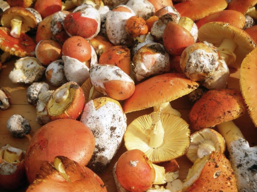 6. funghi-ovoli.1024x768